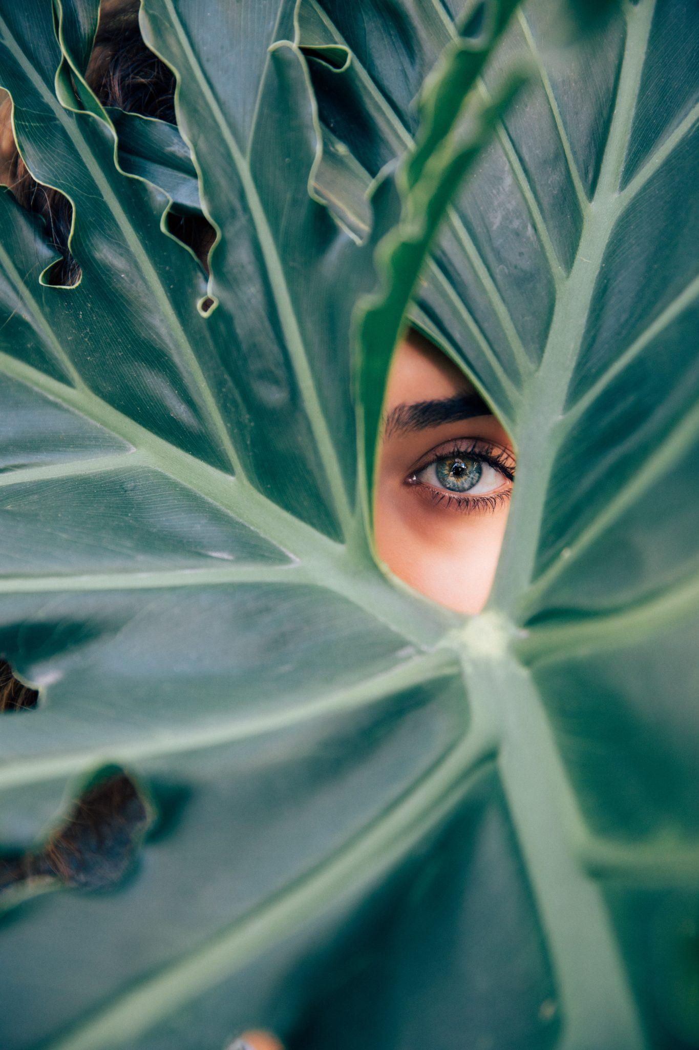 Eye looking through bushes